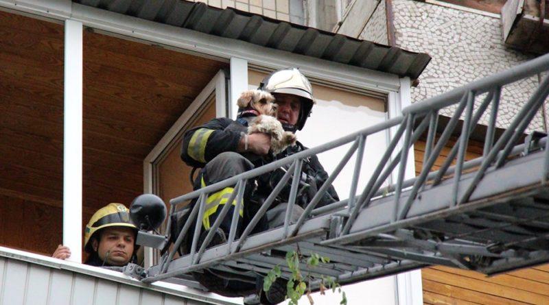 Столичні вогнеборці врятували собаку із задимленої квартири